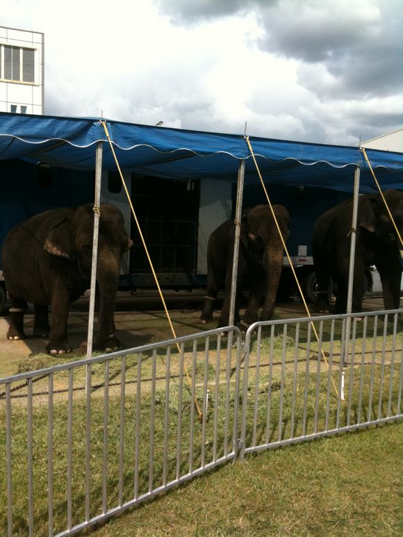 And on our way to the park we stopped and saw some elephants